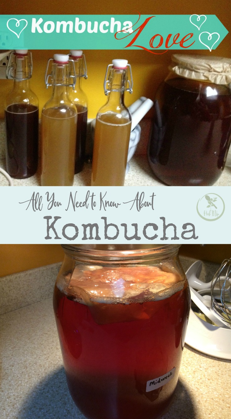 What is kombucha and all your other kombucha questions answered.