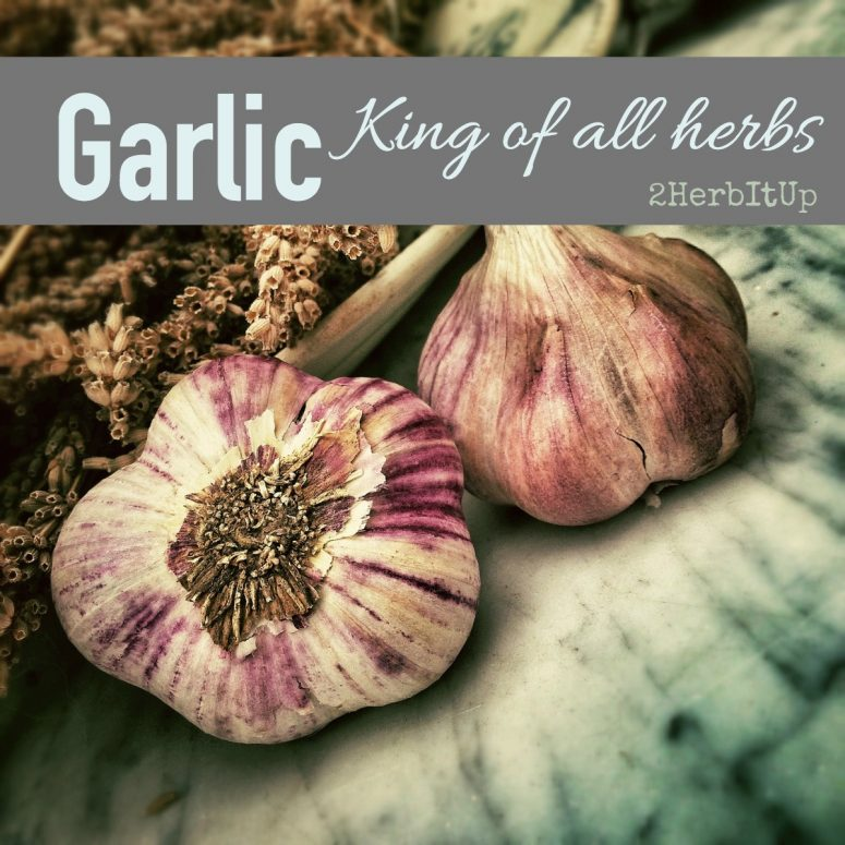 Properties, Compounds, Uses, and Preparations of Garlic
