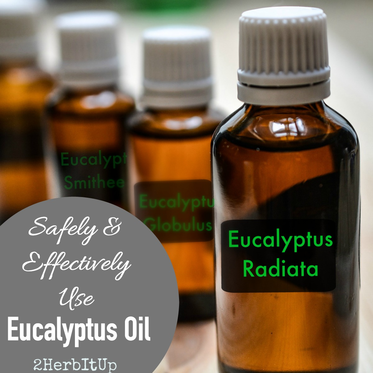 Properties, uses and safety precautions of using eucalyptus essential oil.