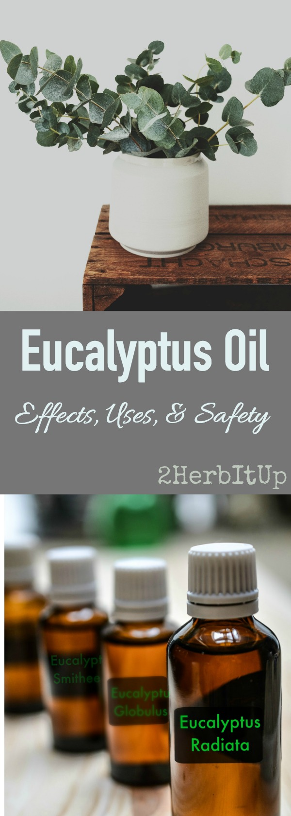 Learn how to safely and effectively use eucalyptus essential oil. Safety recommendations for eucalyptus oil for all ages.