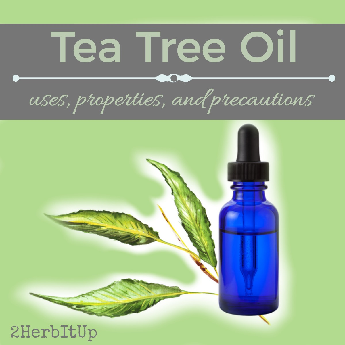 Tea tree oil has a myriad of benefits, see what all it can do here.